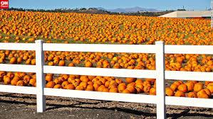 Hurricane Utah Pumpkin Patch by Pumpkin Babies And Demonic Dogs Your Halloween Shots From Around