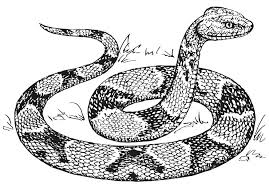 Download Snake Coloring Pages 9