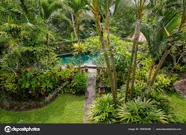 100 Ubud Garden Swimming Pool And Palm Tree In Tropical Garden Island Bali