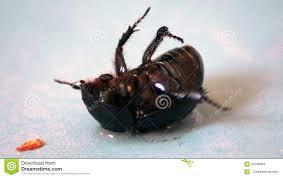 käfer in den badezimmer füßen oben stock