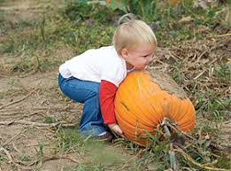 Pumpkin Picking In Ct by Pick Your Own Apples U0026 Pumpkins Corn Maze And Hay Rides At