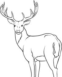 Free Deer Coloring Pages Whitetail Bestofcoloring