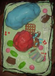 Plant Cell Model Cake – Eclectic Homeschooling