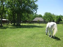 Red Barn Meadow, Barn Apartment And Stalls For Lease: Horse ... Designing Your Stable For Fire And Emergency Safety Exploring Connecticut Barns Uconnladybugs Blog Barn Pros Projects Gallery Horses Pinterest Horse 111 Best Riding Arenas Animal Care Sheds Water Wheels Dog Breyer Classics 3horse Play Set Walmartcom Successful Boarding At Expert Advice On Horse Pasture In Central Alabama Shelclair 10 Tips Farms Stables To Get Ready Spring The Stanford Equestrian Horses Some Of The Horses At Barn Horseback Lancaster
