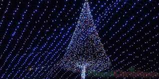 Diy Outdoor Christmas Tree Made Of Lights Lovely Megatrees Easy To Build And Full Wow Planetchristmas