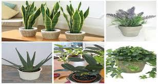 plante chambre voici 5 plantes à mettre dans votre chambre pour combattre l insomnie