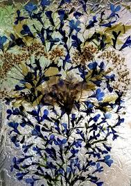 100 Flannel Flower Glass Real Pressed S On 5 X 7 Floating Frame With Blue