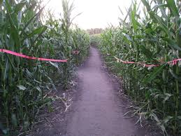 Pumpkin Patch Rice Lake Wi by Guide To Corn Mazes In Wisconsin I Love Halloween