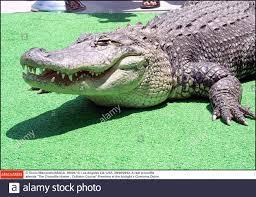 echtes krokodil stockfotos und bilder kaufen alamy