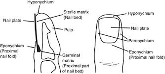 nail bed injury assessment pilot p study should the nail