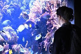 la chasse au trésor de l aquarium aquarium tropical du palais de