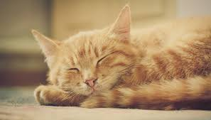 cisapride for cats side effects of the cisapride on cats animals me