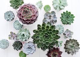 entretien plante grasse d interieur succulentes variétés entretien floraison rempotage maladies