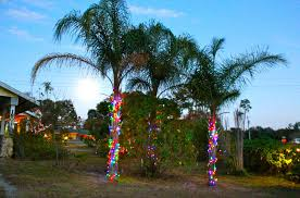Deer Ticks On Christmas Trees by Christmas Lights In Palm Trees Phillip U0027s Natural World