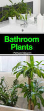 Good Plants For Windowless Bathroom by 25 Unique Indoor Plants Low Light Ideas On Pinterest Low Light