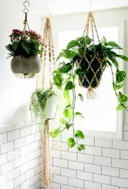 pflanzen bad efeutute blumenel decke hängend wandfliesen