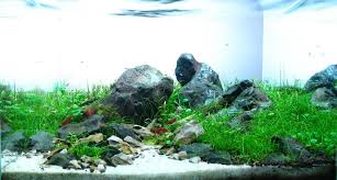 Cuisine: Aquascape Designs Fish Tank Aquascape Designs For Your ... September 2010 Aquascape Of The Month Sky Cliff Aquascaping How To Set Up A Planted Aquarium Design Desiging Tank Basic Forms Aqua Rebell Suitable Plants With Picture Home Mariapngt Nature With Hd Resolution 1300x851 Designs Unique Hardscape Ideas And Fnitures Tag Wallpapers Flowers Beautiful Garden Best 25 Aquascaping Ideas On Pinterest From Start To Finish By Greg Charlet