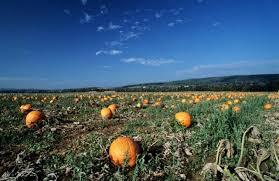 Pumpkin Farms In Belleville Illinois by Pumpkin Farms Pumpkin Patch Farms Near Schaumburg Il Listed By