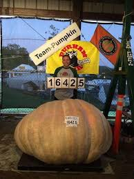 Natural Fertilizer For Pumpkins by Grow Your Own Giant Pumpkin Growing Kit Wallace Organic Wonder