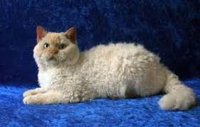 Cat Breeds A Z Funny and Cute Cats Gallery No Shed Cats Tridanim