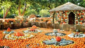 Grapevine Texas Pumpkin Patch by Jay Around Town The 2017 Guide To Fall Festivals U0026 Pumpkin