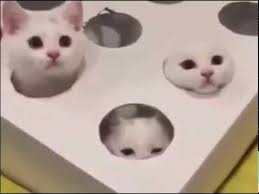 Kittens Play Reverse Whack A Mole