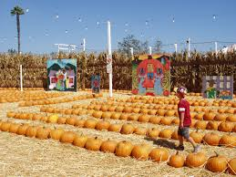 Pumpkin Patch South Pasadena by The Bungalow Long Beach U0027s Bungalow Specialist Page 2