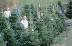 Christmas Tree Farm 013