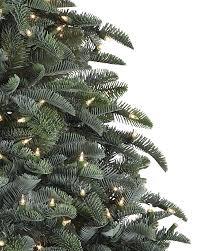 Noble Fir 1 BH Tree 2