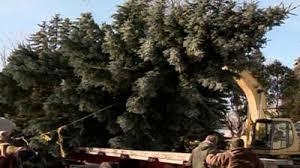 45 Foot Green Bay Tree Selected As Lambeau Field Christmas Tree