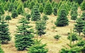 Broadview Christmas Tree Farm Wedding by Southeast Michigan Includes Detroit Christmas Tree Farms Choose