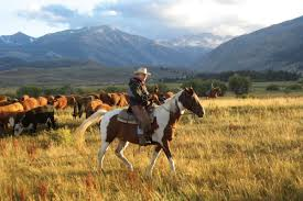The Best Ranch Vacations Of The West - American Cowboy | Western ... Meadows Equestrian Center On Equinenow 96 Best Vet Books Images Pinterest Horses The Horse And A5f1895b8566a63e9b0f3f2269a3cfaae57a8ajpg Dressage In Faraway Places Today Full Clinic Anchorage Ak Chester Valley Veterinary Hospital Blog Archives Mountain Homes 4 Horse Country 2 2014 Digital By Linda Hazelwood Issuu Nottingham Equine Colic Project 25 Cozy Bed Barns Horserider Western Traing Howto Advice Best Ranch Vacations Of The West American Cowboy