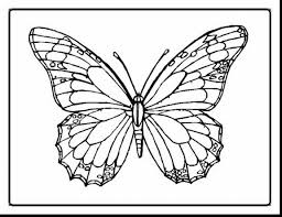 Brilliant Butterflies Coloring Page With Free Butterfly Pages And Fairy