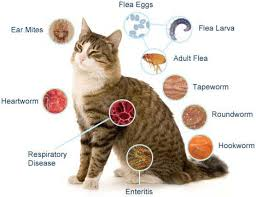 signs of worms in cats happy cat home how do cats get worms