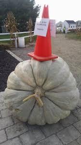 Pumpkin Patch Sf Yelp by Watch The Pumpkin Yelp