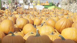 Denver Area Pumpkin Patches by 100 Denver Pumpkin Patch Corn Maze Hail Damages Fritzler
