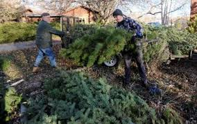 Christmas Tree Permits Colorado Buffalo Creek by Longmont Area Tree Lots Scrambling After Summer Fires Longmont