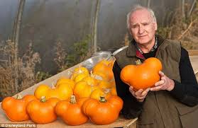 Types Of Pumpkins Grown In Uganda by Mickey Mouse Shaped Pumpkin Heads Grown By Disney Daily Mail Online