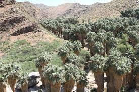 TravelMarx Indian Canyons Moorten Botanical Garden and Palm