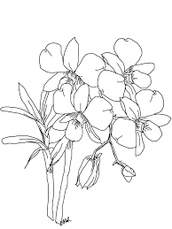 gousicteco Orchid Drawing Black And White