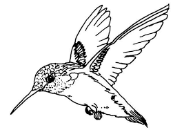Flying Magnificent Hummingbird Coloring Page