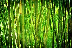 Bamboo Privacy Hedges - Are They Good Noise Barriers? Noise Barriers What Kind Of Fence Blocks Road Sounds How To Reduce Noises In Your Outdoor Living Spaces Youtube Featured Landscape Projects Take Root With Dennis 7 Dees Pollution Versus Quiet Ctemplation Acoustiblok Website To Make Yard Private Hgtv Bamboo Privacy Hedges Are They Good Wild Turkeys Effective Wildlife Solutions Gabion Barrier Walls And Sound Proof Fences Uk Wide 20 Best Front Landscaping Hide Traffic Images On Pinterest Architectural Design Soundproofing Materials