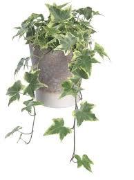 nasa forscher empfehlen diese zimmerpflanzen verbessern