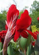 corm tuber bulbs roots rhizomes ebay