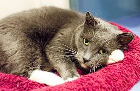haired cat cat grooming tips aspca