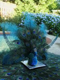 Cheap Peacock Wedding Decorations workshop