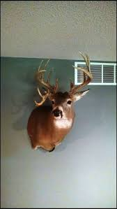 When Do Deer Shed Their Antlers Ontario by How Rare Are Droptines Survet Stories