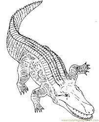 Alligator Colallig Printable Coloring Page