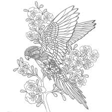 Birds A Mindful Colouring Book
