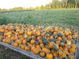 Pumpkin Patch Chesapeake Va by Don U0027t Miss These 14 Pumpkin Patches In Virginia This Fall
